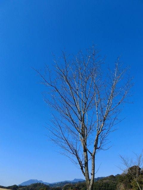 今日は立春 「人生を楽しむ心」そういう余裕を持って生きたいですよね。